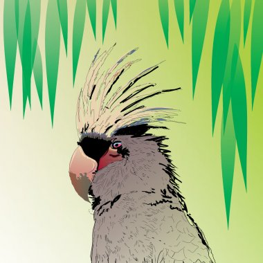 birds parrot