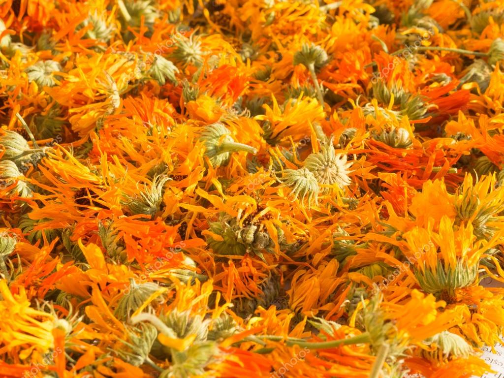 drying marigold calendula officinalis