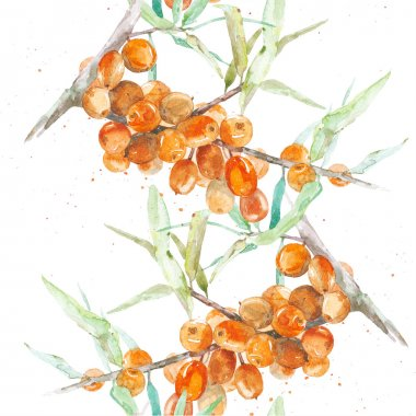 Watercolor sea buckthorn on white background