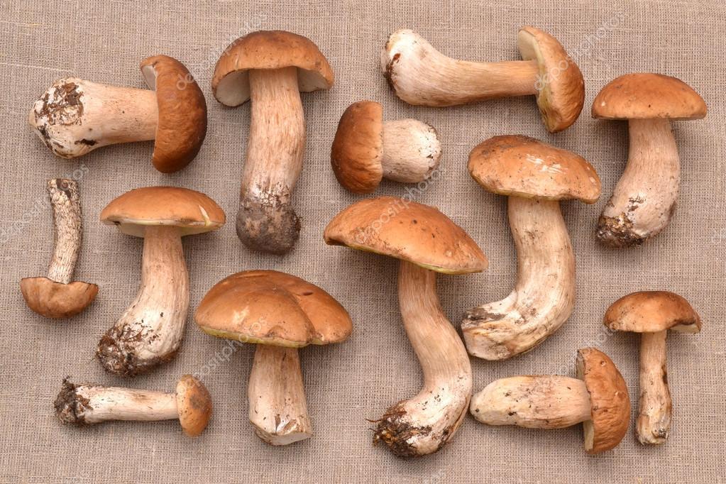 Funghi Porcini Su Una Struttura Di Tela Foto Stock C Luda311