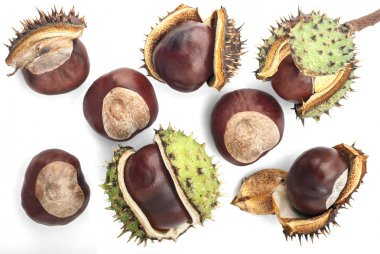 Eight Chestnuts