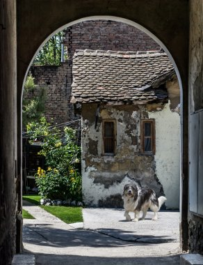 Bearded Collie near ruined house