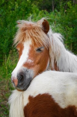 Ponies familiy