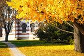 Části stromu Ginkgo podzim v městském parku