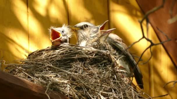 das Nest mit Küken auf einem Landhaus