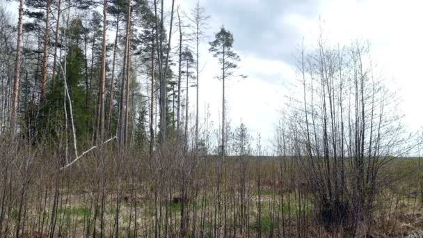 Spring day undergrowth in Russia