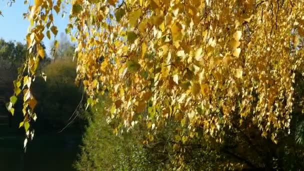 Žluté listy na pozadí zelené a na podzim