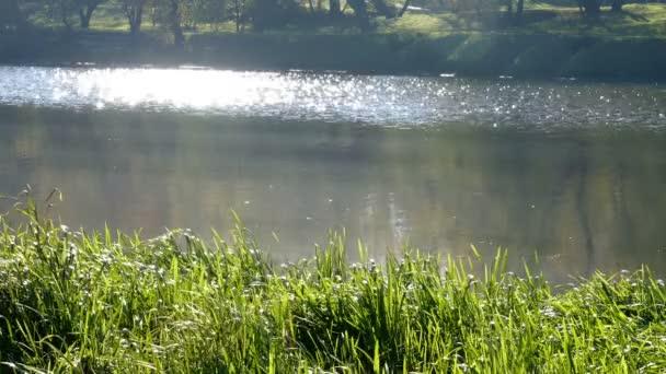 Jezero přes rákosí s dráhou slunce