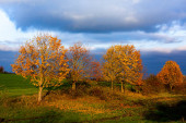 Beautiful autumn landscape with yellow trees, green and clouds. Falling leaves natural background Colorful foliage in the park