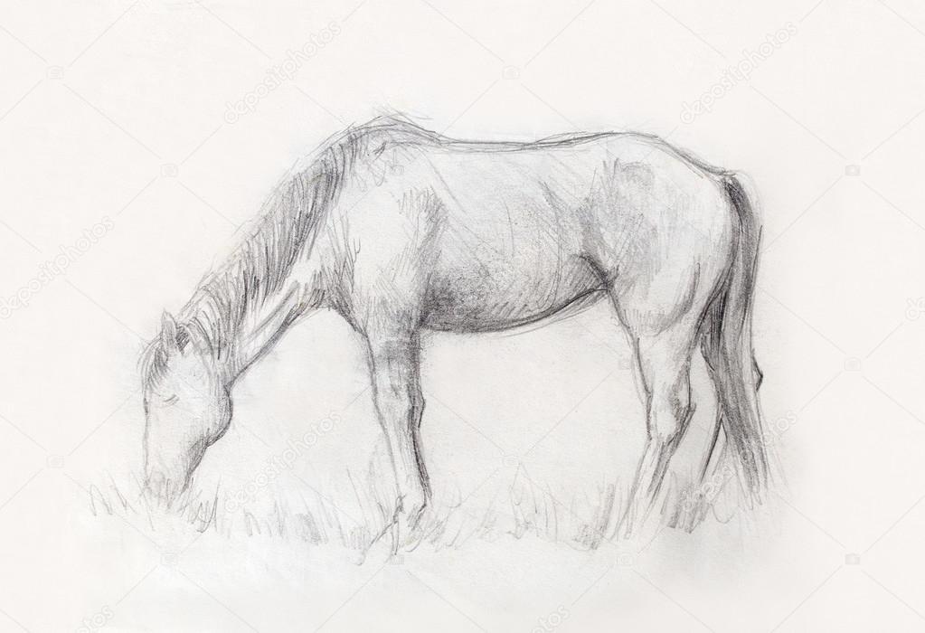 Bleistift Pferd Zu Zeichnen Auf Dem Alten Papier Und Alten Jahrgang