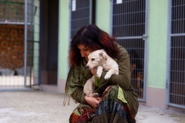 dogs in dog shelter and woman. Animal shelter.