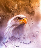 Photo Symbol of American Freedom, wild bald eagle , one stretching his black wings to fly, on abstract background