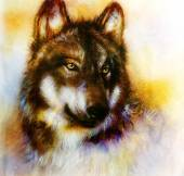 Photo Wolf painting, color  background on paper , multicolor illustration.