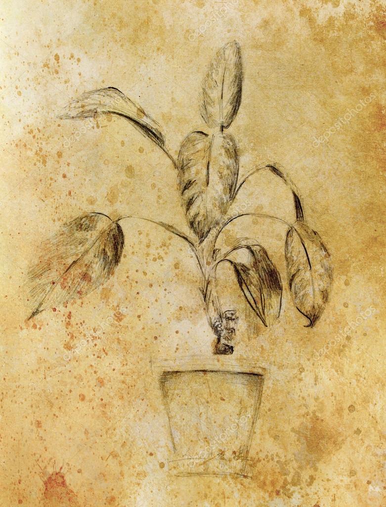 Hand drawn ropical plants. Plants Dieffenbachia sketch. Sepia color ...