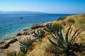 Picturesque Seashore of Brac island