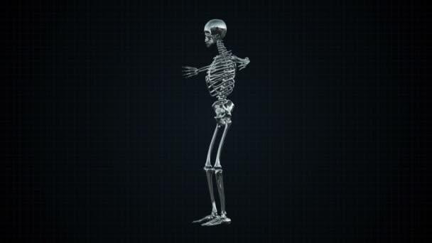 3D-s animáció emberi csontváz ezüst Loopable. Alfa-Matt