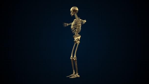 3D animace lidské kostry zlata Loopable. Alfa matný