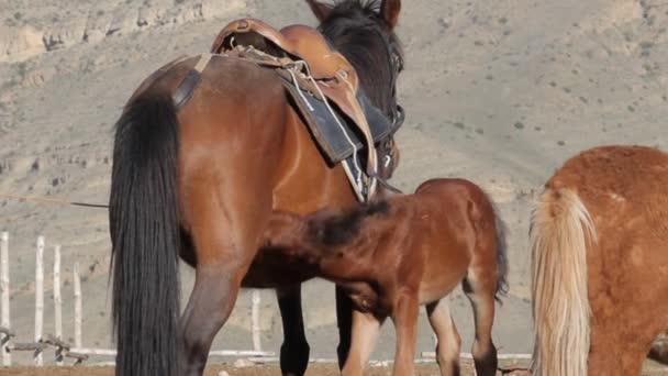 kůň v horách