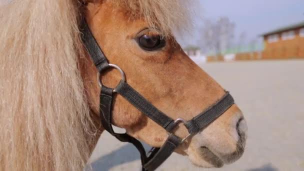 Egy kis ló