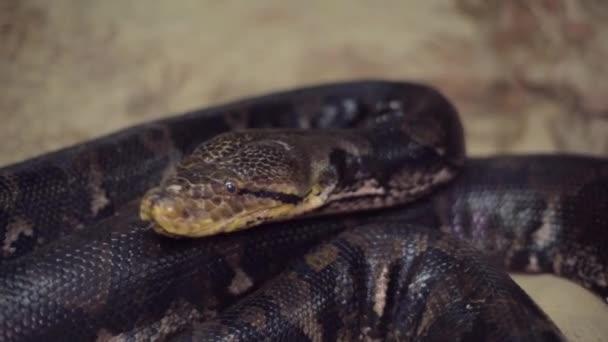 kígyó a terráriumban