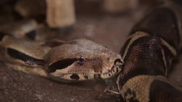 Snake In The Terrarium Stock Video C Bcbgstudios 120092068