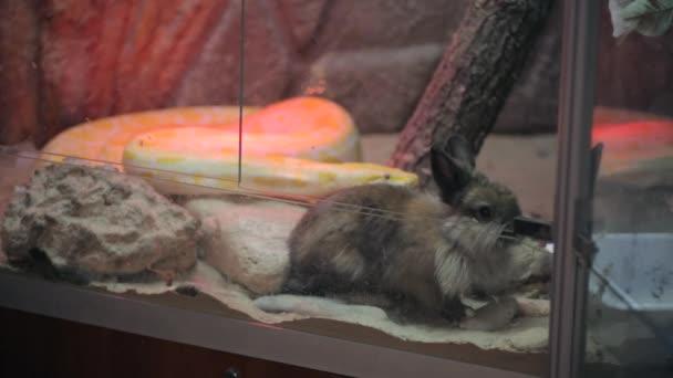 Eine Schlange greift ein Kaninchen