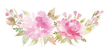 Peonies watercolor.