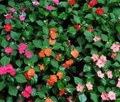 Fényképek gyönyörű színes virágok