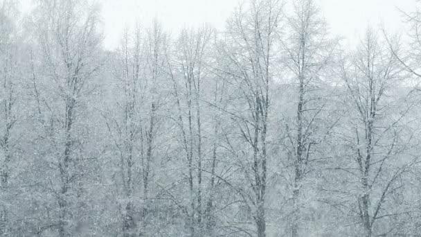 Mega velký globální sněžení smyčky zimní Les