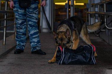 Eğitimli bir köpeği olan kadın polis ya uyuşturucu bulur ya da bagajdaki bombayı. Alman çoban köpeği..