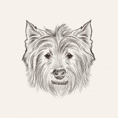 Highland white terrier
