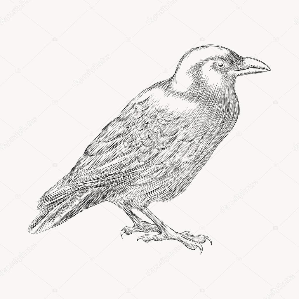 Pájaro negro Cuervo — Archivo Imágenes Vectoriales © i_panki #64060201