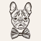 Photo Sketch French Bulldog with bow tie. Hand drawn dog illustration.