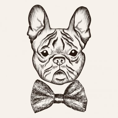 Sketch French Bulldog with bow tie. Hand drawn dog illustration.