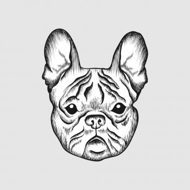 Sketch French bulldog. Hand drawn face of dog illustration.