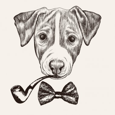 Sketch Jack Russell Terrier Dog with bow tie and tobacco pipe. H