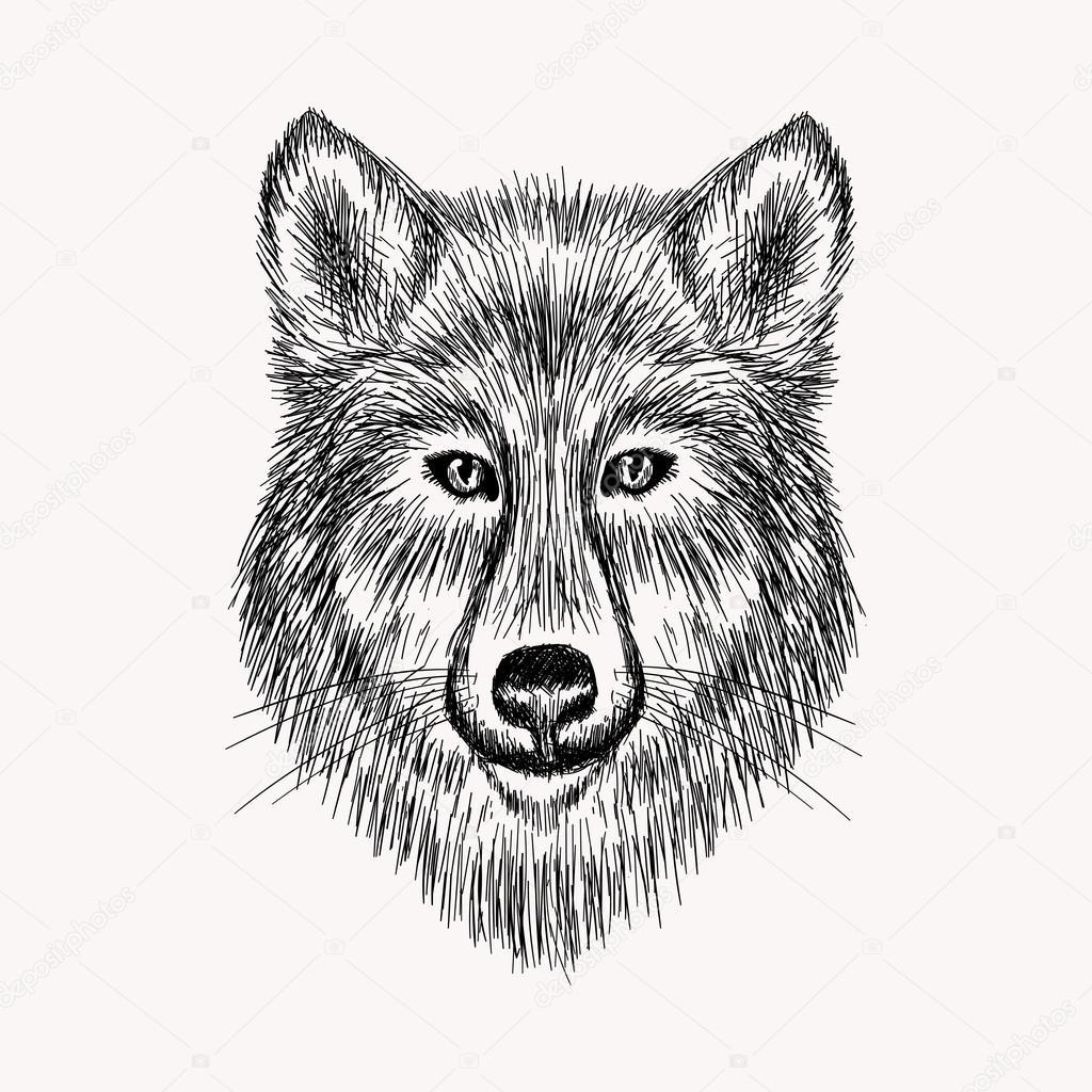 Dibujos Cara De Lobo Dibujo Realista De Cara De Lobo Vector De