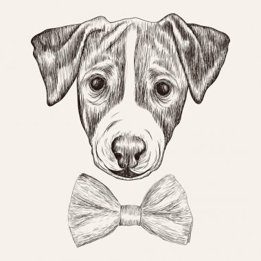 Sketch Jack Russell Terrier Dog