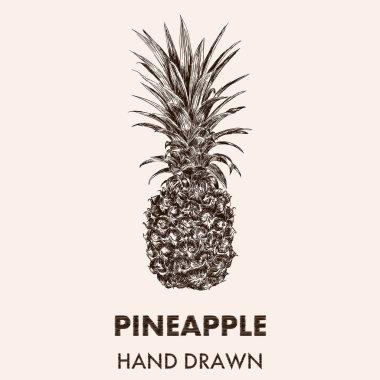 Sketch pineapple illustration.