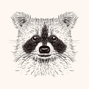 Sketch liner raccoon. Hand drawn vector  illustration in doodle