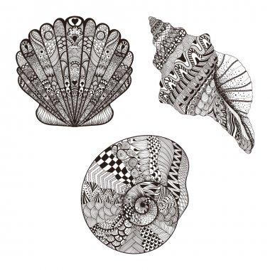 Zentangle stylized set seashells. Hand Drawn vector illustration