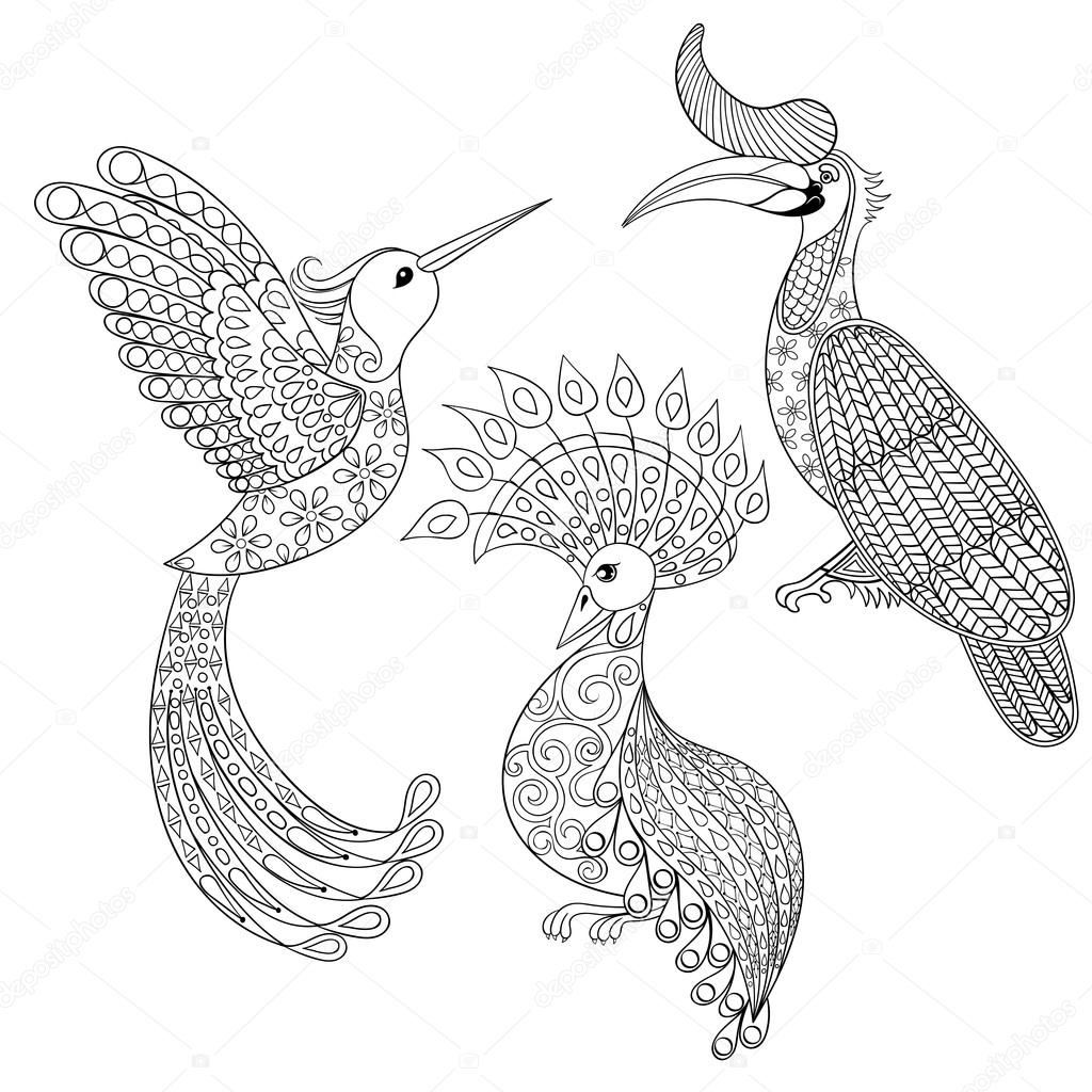 Coloring page with Bird Rhinoceros, Hummingbird and exotic bird,