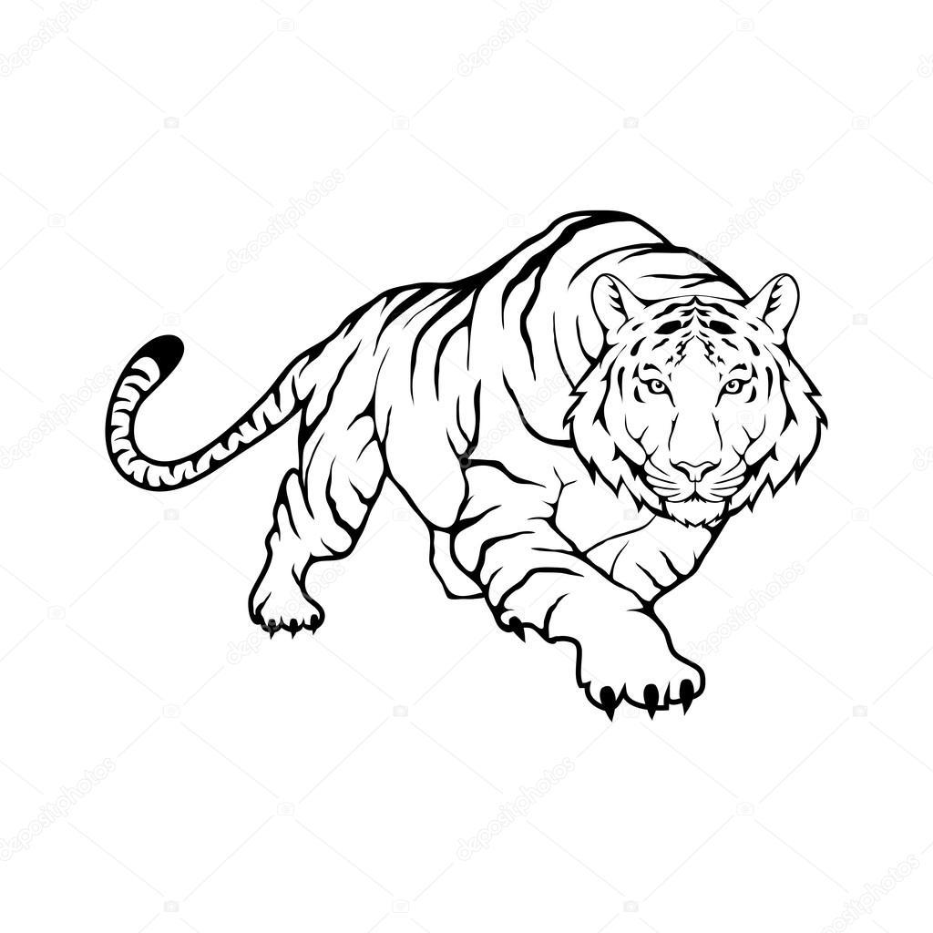 Tiger Logo Template Vector Image By C Korniakovstock