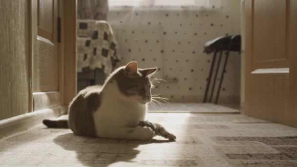 Eine weiße Hauskatze spielt unter Sonnenlicht mit einem Spielzeug und läuft davon