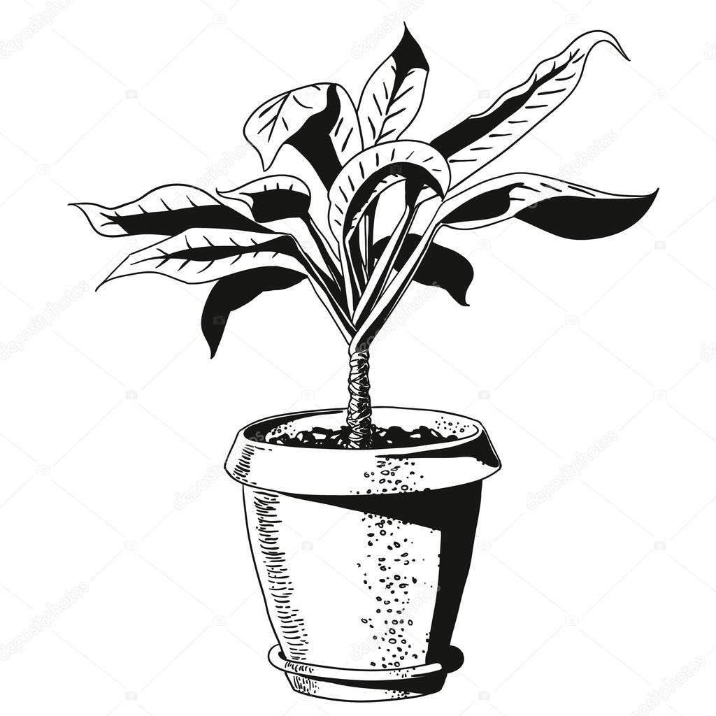 flower in a flowerpot. vector