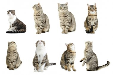 Beautiful cats collage