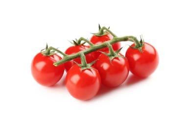 Cherry tomatoes branch