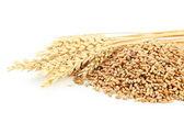 Uši pšenice a rýže, pšenice