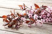 jarní kvetoucí větev