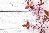 Fotografie jarní kvetoucí větev